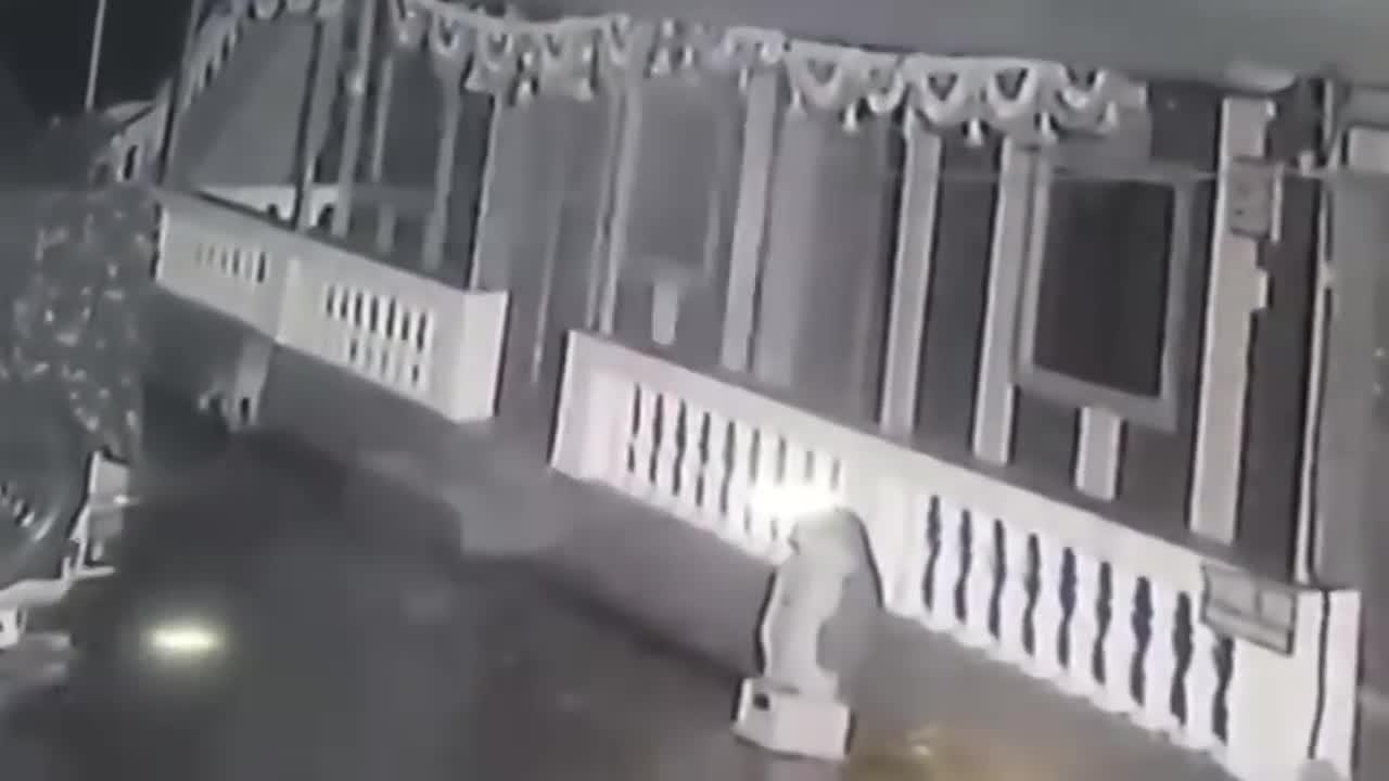 Giải trí - Clip: Pitbull bị báo hoa mai kết liễu, ngoạm cổ lôi đi trong đêm