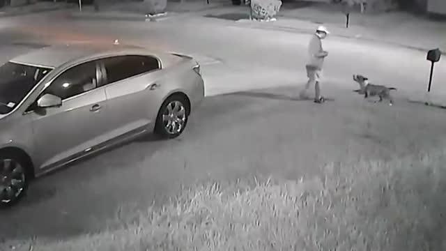 Mới- nóng - Clip: Cụ ông 67 tuổi bị 2 con chó Pitbull tấn công trên phố