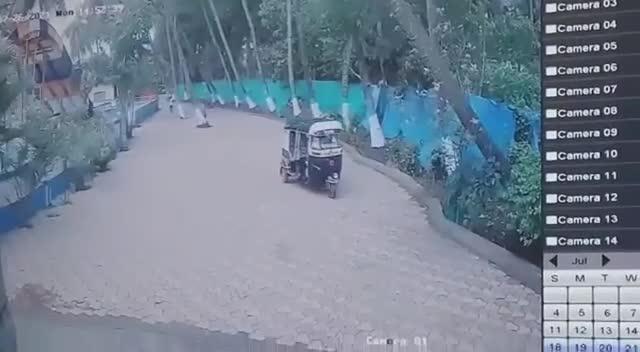 Mới- nóng - Clip: Cây dừa bật gốc đè bẹp xe 3 bánh, tài xế thoát nạn khó tin