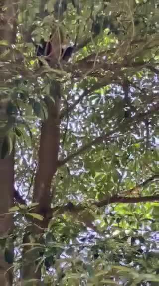 Môi trường - Xuất hiện 2 cá thể voọc quý hiếm trong khu nghỉ dưỡng ở Thừa Thiên-Huế