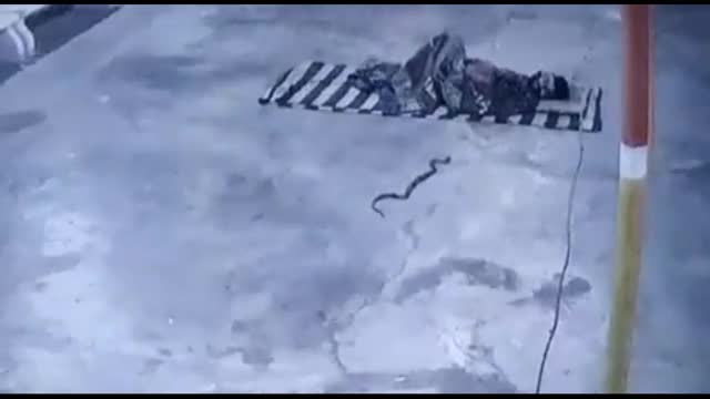 Mới- nóng - Clip: Người đàn ông hoảng loạng bật dậy, né cú đớp của rắn hổ mang
